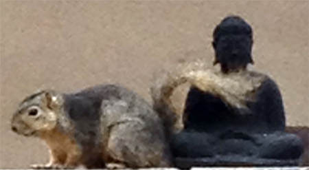 buddha-squirrel